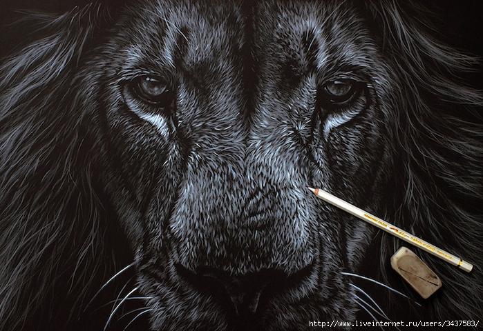 Реалистичные портреты диких животных/3437583_realistichnyeportrety242 (700x480, 352Kb)