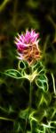 ������ 1.Абстракция. Цветок - фото (273x640, 173Kb)