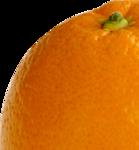������ 0010-clipart-apelsin (650x700, 427Kb)