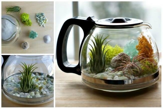 аквариум из обычного чайника (650x435, 200Kb)