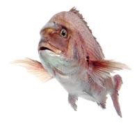 рыба3 (200x180, 22Kb)