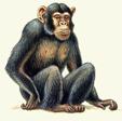 ������ st1-monkey1[1] (113x112, 24Kb)