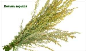 polynj-gorkaj-trava (300x178, 7Kb)