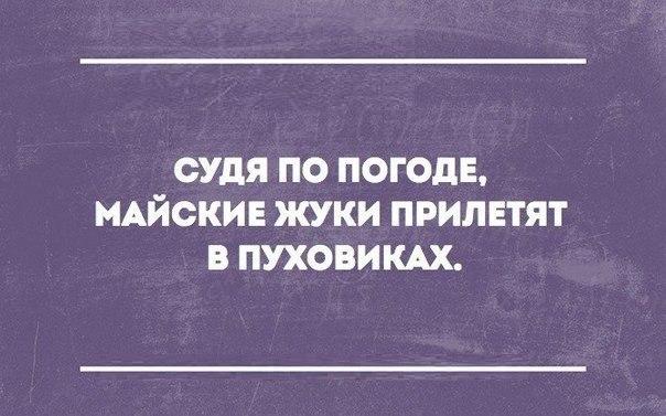 жуки/4264148_jyki_1_ (604x377, 51Kb)