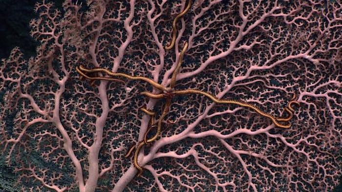 morskie-organizmy-3-6 (700x393, 402Kb)