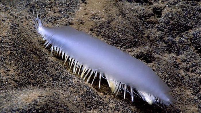 morskie-organizmy-3-9 (700x393, 358Kb)
