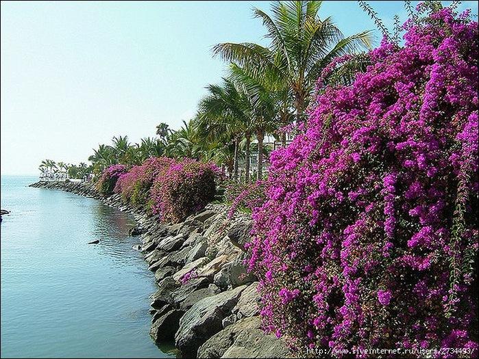 Пуэрто-де-Моган - стопроцентный земной рай 13