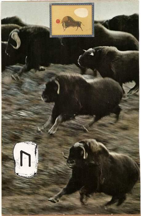 Старший Футарк. Скандинавская мифология. 64292505_1285045103_uruz