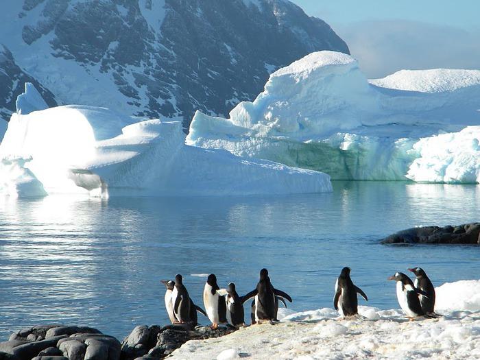 Антарктида 38756