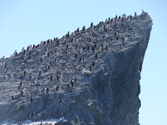 Антарктида 89293