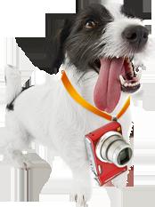 funny_dog (174x233, 59 Kb)