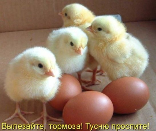 http://img0.liveinternet.ru/images/attach/c/2//64/415/64415661_1285307300_121.jpg