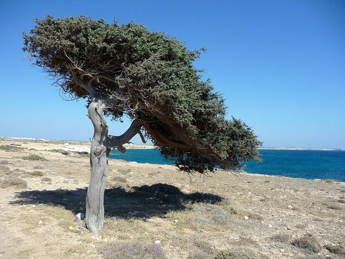Остров Карпатос - высокие горы, традиционные поселки, пляжи на юге... 21987