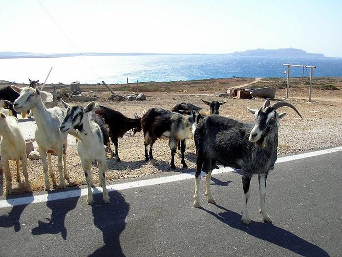 Остров Карпатос - высокие горы, традиционные поселки, пляжи на юге... 69566