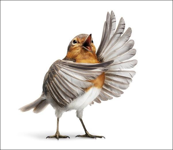 Оперные птицы от студии Aorta 3
