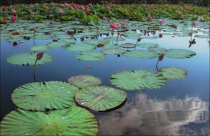 Красота нашей планеты - 60 отличных фото 39
