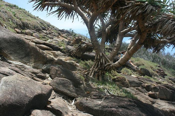 Oстров Фрейзер — объект всемирного достояния человечества и самый большой песчаный остров в мире. 34167