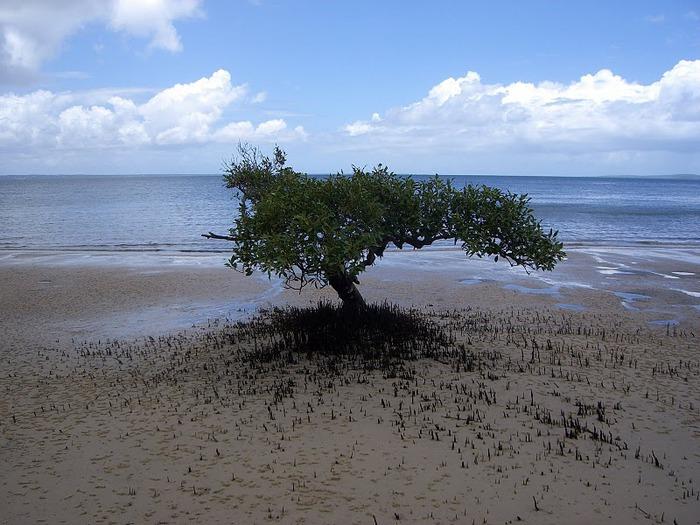 Oстров Фрейзер — объект всемирного достояния человечества и самый большой песчаный остров в мире. 24389
