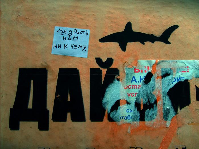 монолог с городом, бумажки с надписями, Порочные Связи, акула, мудрость, дайвинг