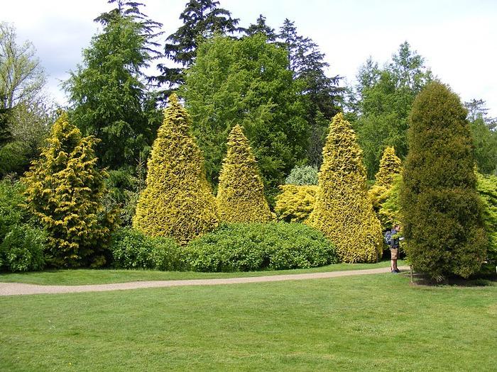 Nymans Gardens 82811