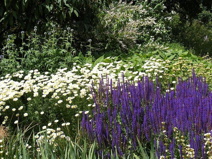 Nymans Gardens 46966