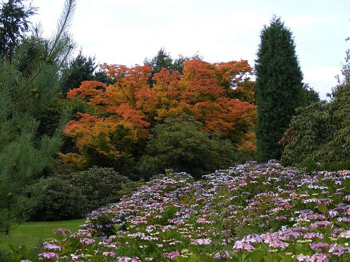 Nymans Gardens 13290