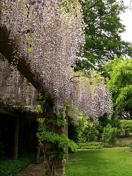 Nymans Gardens 66716