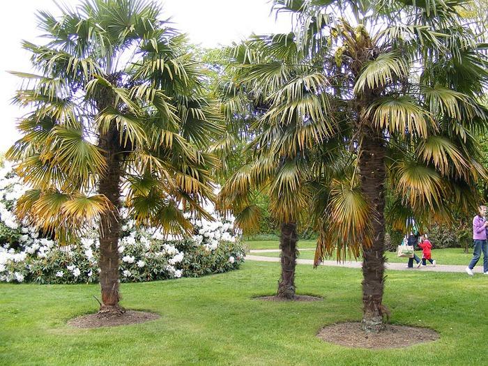 Nymans Gardens 81318