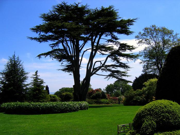 Nymans Gardens 42748