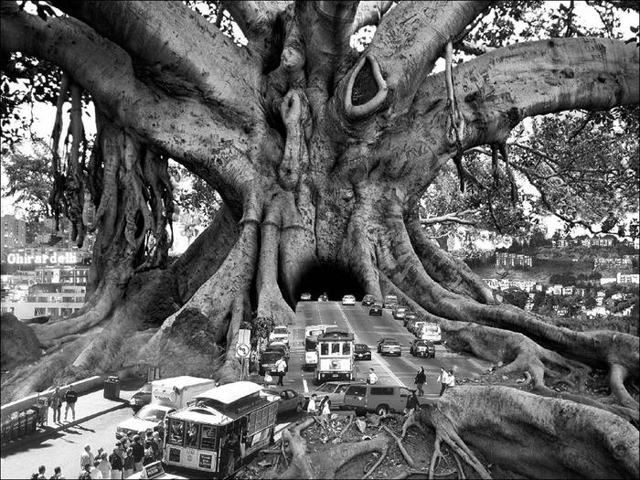 Волшебный мир фотохудожника Thomas Barbey 3
