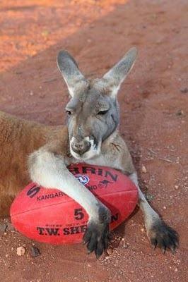 Домашний кенгуру 4