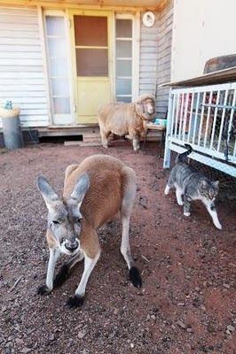Домашний кенгуру 5