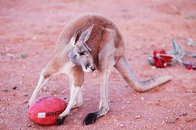 Домашний кенгуру 9