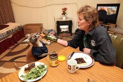 Домашний кенгуру 26