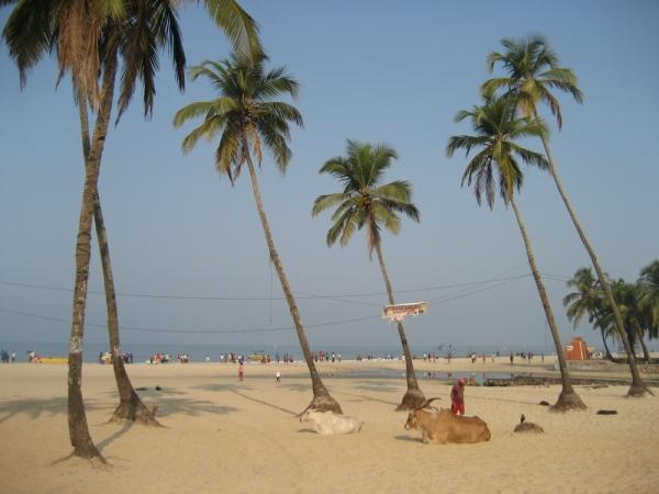 Goa (600x450, 188 Kb)