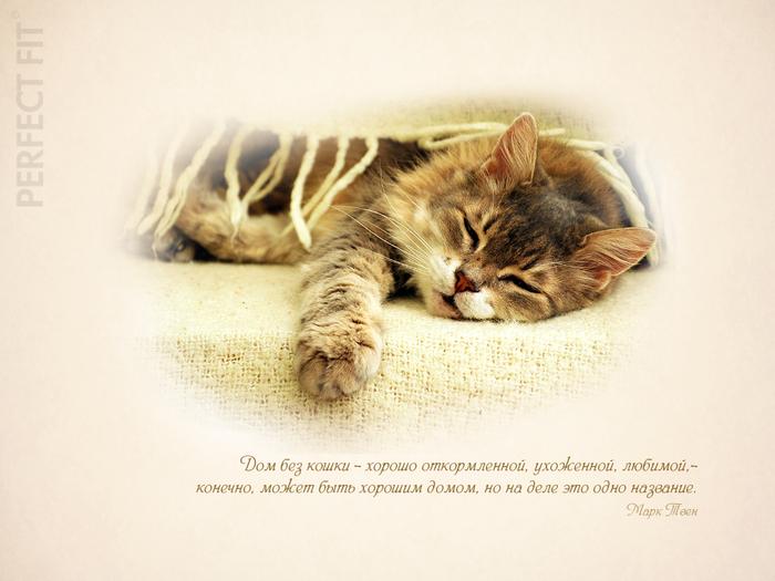 Великие о кошках