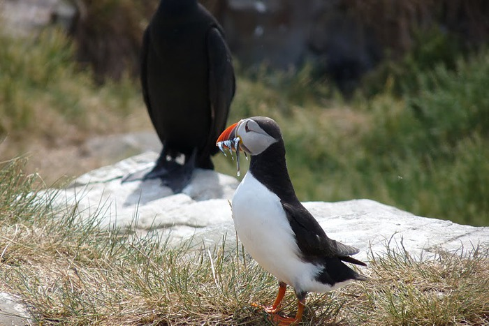 Farne Islands 60617