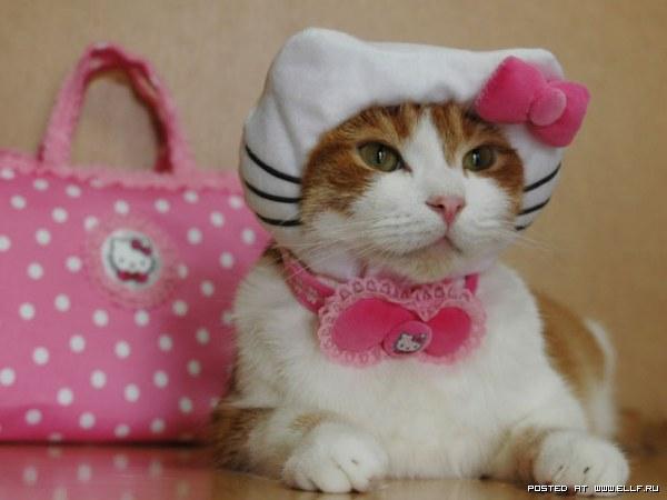 еще гламурные кошки...
