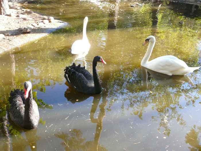 Птичье раздолье: черное и белое