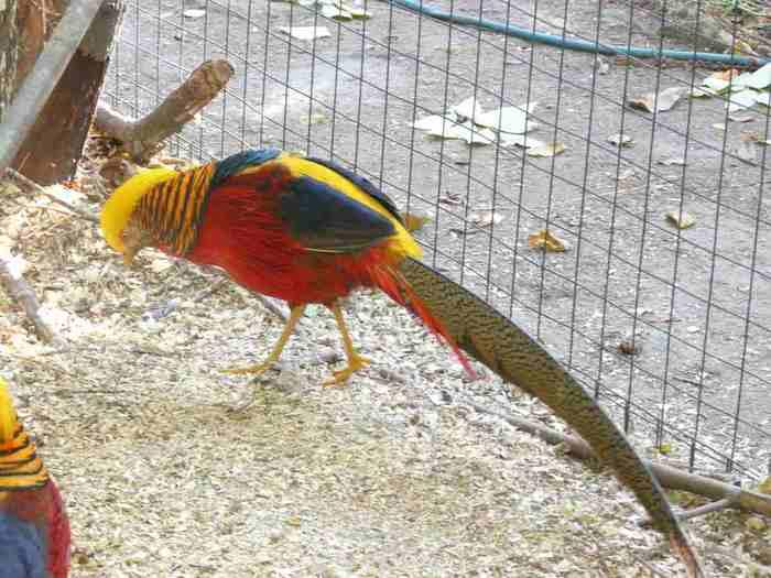 Птица с красивым пестрым оперением