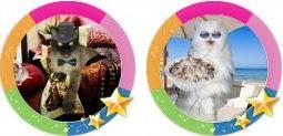 Конкурс для владельцев кошек - Кототворчество