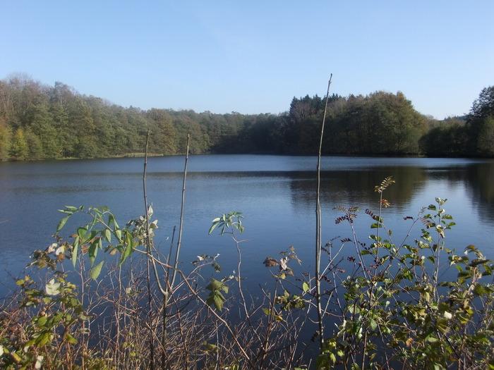 Осенний денёк на озере в Лангенау, Саксония 51593