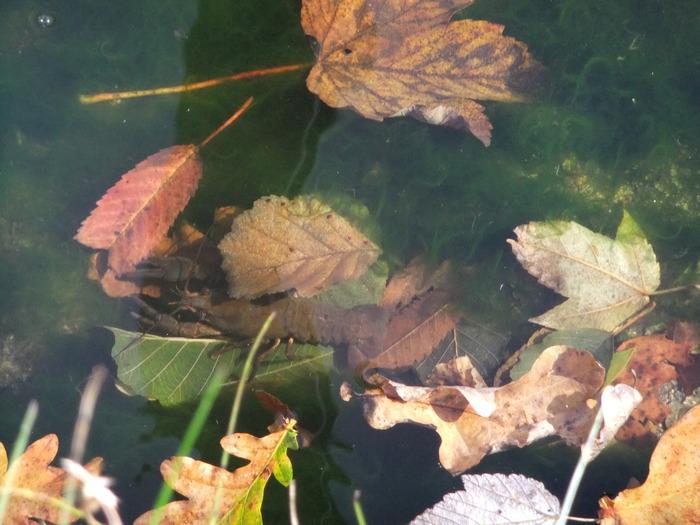 Осенний денёк на озере в Лангенау, Саксония 24785