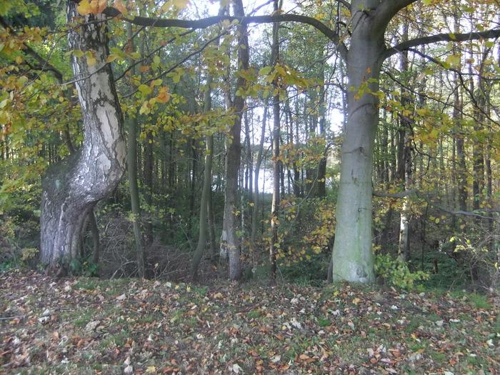 Осенний денёк на озере в Лангенау, Саксония 74220