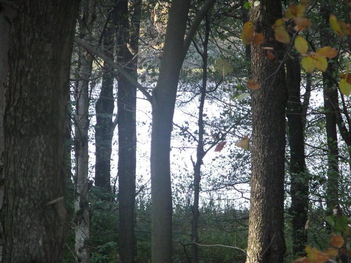 Осенний денёк на озере в Лангенау, Саксония 51730