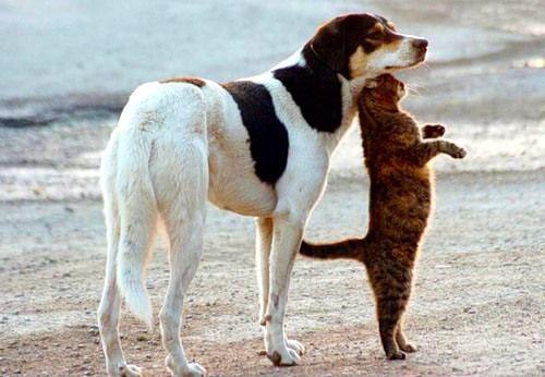 кошку и среднюю собаку по...