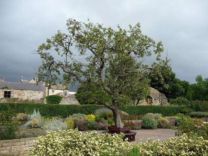 Barnard Castle - Замок Барнард 96483