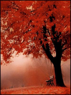 1288162624_4756299_892733_175114_9062670_18253314_10203329_under_red_tree_by_saligia (300x400, 50 Kb)