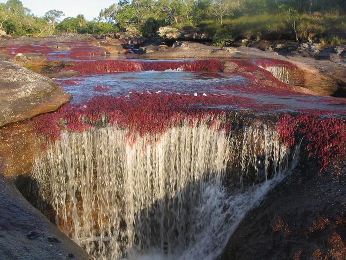Каньо Кристалес (Колумбия) - самая красивая река мира. Виртуальное путешествие