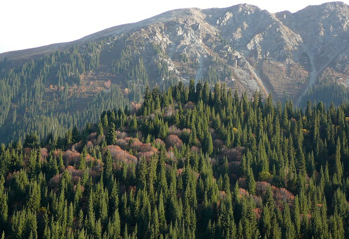 Киргизия-Фотозарисовки. 81542
